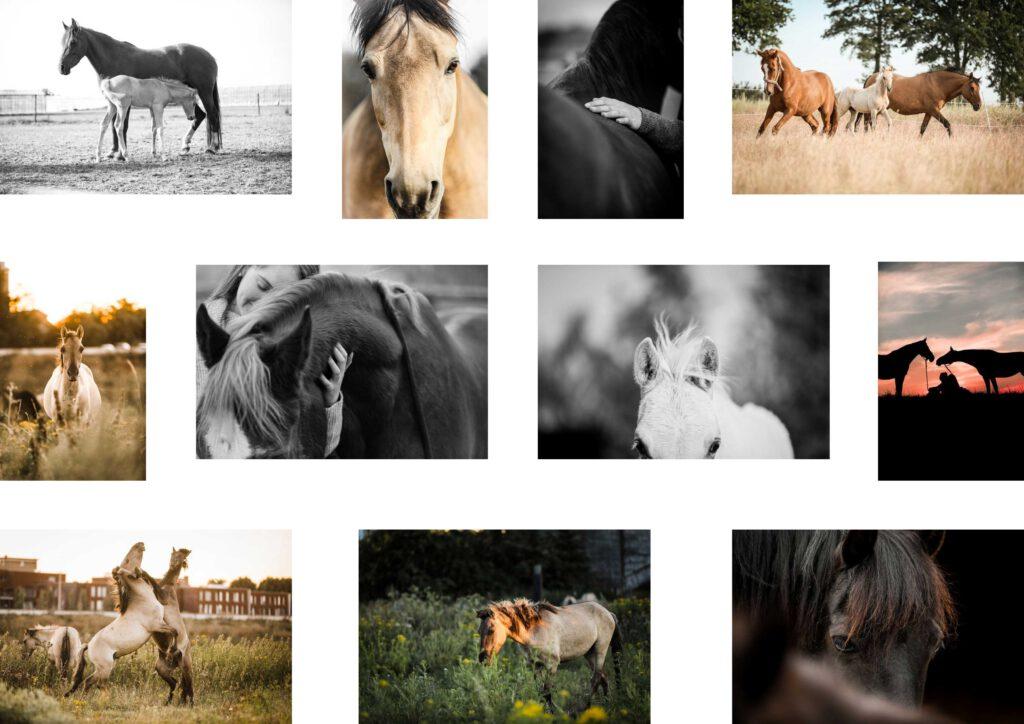 Dieses Bild hat ein leeres Alt-Attribut. Der Dateiname ist Luisa-Berger_web-1024x724.jpg
